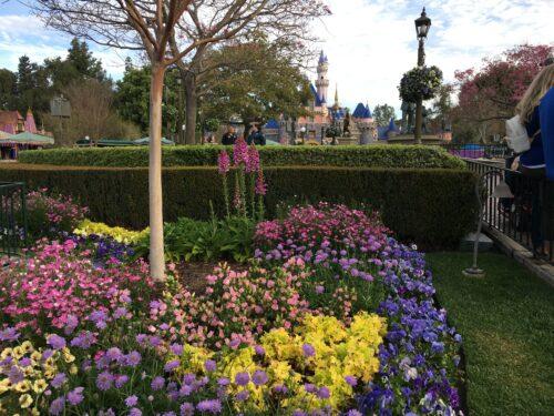 Disneyland spring flowers